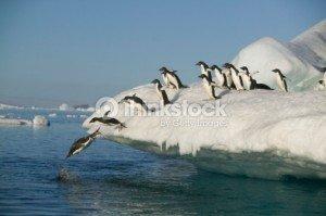 pingouin 2